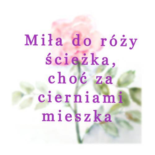 2. Róża